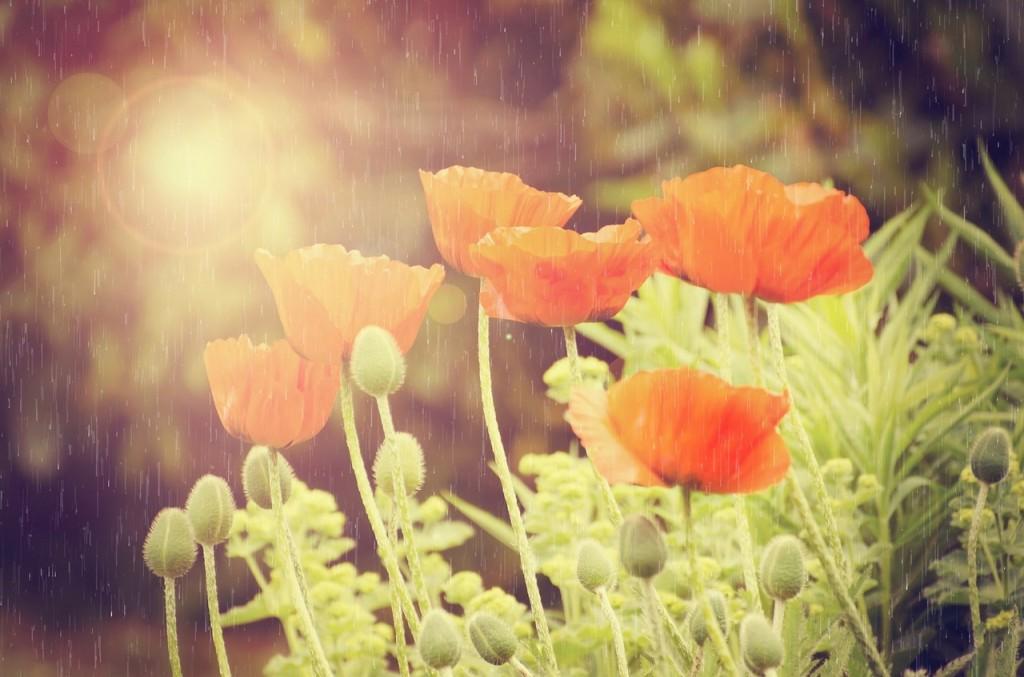 flowers-315533_1280